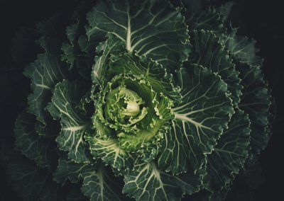 cabbage-leaves-lettuce-212932